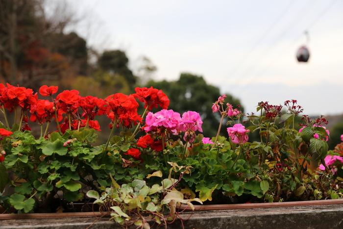 布引ロープウェイの「ハーブ園山頂」駅からなだらかな傾斜地となっている敷地内には、色とりどりの花々やハーブが咲き乱れています。ここちよいハーブの香りに包まれ、色とりどりの花々を眺めながら小径を歩く気持ち良さは格別です。