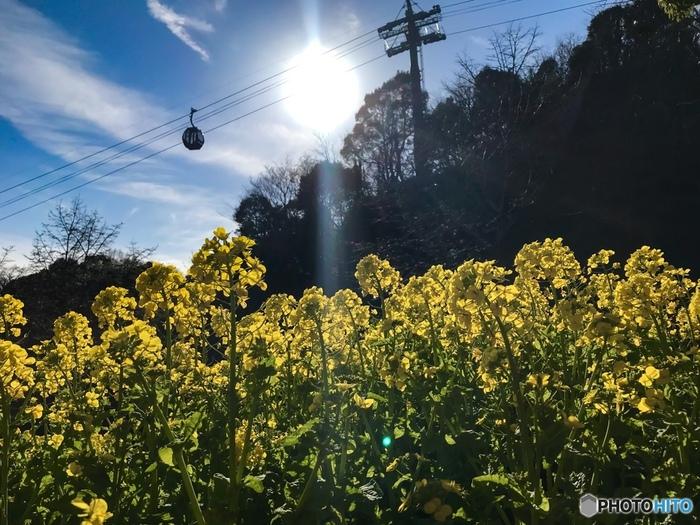 布引ハーブ園は、神戸布引ロープウェイ「風の丘中間」駅と、「ハーブ園山頂」駅に広がる、ハーブを中心とした様々な種類の植物が栽培されている植物園です。