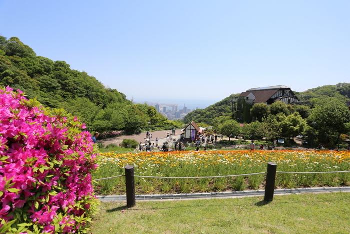 風の丘は、緩やかな傾斜地となっている花壇一面に季節の花々やハーブが咲き乱れる庭園です。ここは、花とハーブが美しいだけでなく、神戸市街地の景色を眺めることができる眺望スポットにもなっています。
