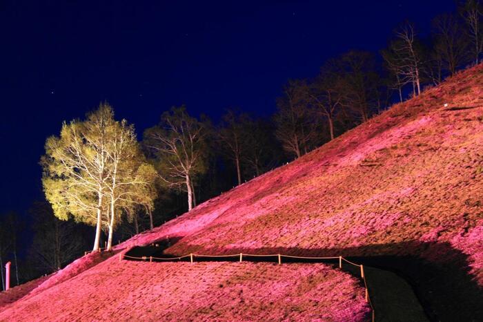 芝桜まつり開催期間中は、夜間の芝桜のライトアップが施されます。漆黒の世闇を背景に、赤、濃淡ピンク、白の芝桜が浮かび上がる様は幻想的で日中とは異なる風情を楽しむことができます。