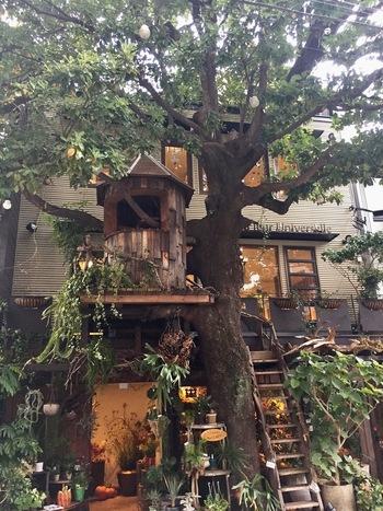 広尾駅から徒歩1分のこちらのカフェは、ドラマのロケ地にも使われた人気スポットです。絵本に出てきそうなツリーハウスは、ワクワクして童心に返ることができますね!