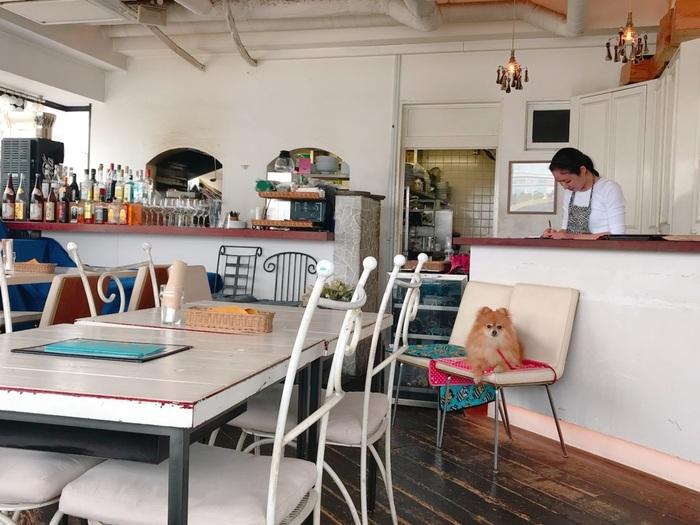 ドッグカフェも多いお台場。中でも「TARLUM BIANCO(タールビアンコ)」は、隠れ家のような雰囲気と充実したペット用のサービスと、お台場のオーシャンビューを最前線で見られる絶好のロケーションから人気を集めるカフェです。お台場海浜公園内、マリンハウスの2階にあります。