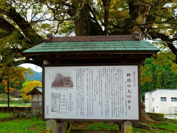 野間の大けやきが生育している場所は、かつて蟻無宮(ありなしのみや)と呼ばれる神社の境内で、野間の大けやきはその御神木として祀られていました。大けやきの近くには看板があり、この木の樹齢、由来などが詳しく説明されています。