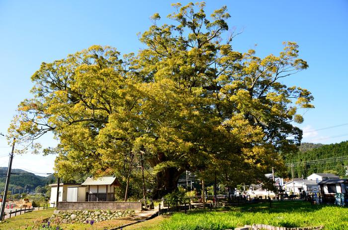 《大阪府》神秘的な魅力を持つ天然記念物「野間の大けやき」と近郊スポット