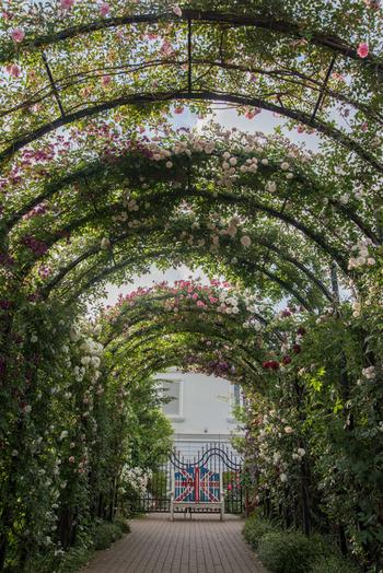 50m以上ある「ローズトンネル」は、トンネルの隙間から差し込む太陽の光に照らされた美しいバラの姿が魅力。ピンクと白を基調とした淡い色合いと愛らしさにうっとり。