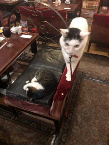 アルルには2匹の看板猫がいて、丸くなって寝ているのが「石松」、椅子の上を器用に歩いているのが「次郎長」です。なんとも渋くかわいらしい名前ですね。ちなみに初代猫は「五右衛門」というのだそう。