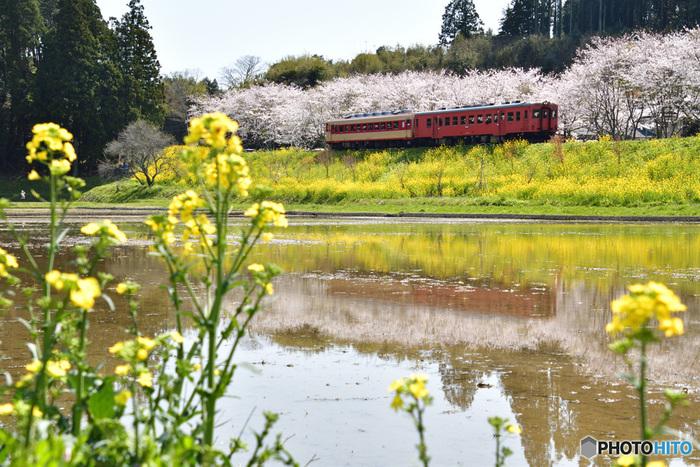 都内からほど近い場所で、こんなにのどかな風景に出合えるのはうれいいものですね。たまには、ローカル線に揺られてお花見というのも良いですね。