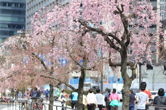 数多くの皇居ランイベントが開かれているので、そちらに参加してみるのも楽しいです。例えばお花見の時期には、桜並木の中を気持ちよく走るイベントや、女性限定でアフターパーティーもついている「東京ガールズマラソン」なども人気のイベントです。初心者やファミリーで気軽に参加できるイベントも多いので、ぜひチェックしてみてくださいね。