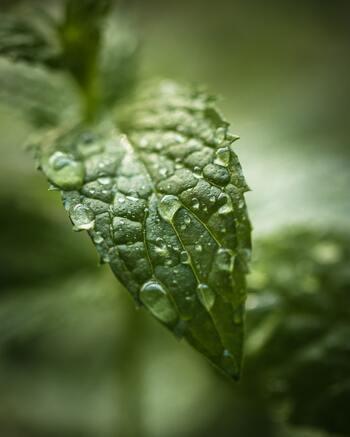 ペパーミントの精油を2~3滴ほど垂らした水でタオルを濡らし、絞ってから顔に乗せてみて。ミントのひんやり感が加わって、すっきりと汗が引いていきますよ。