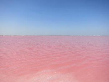 カンクンから約3時間で到着。ピンクレイク「リオラガルトス」。フラミンゴを連想させるような真っピンクの湖。水中に含まれているバクテリアと、塩分濃度の関係で美しいピンク色が生まれているそう。太陽の光により、キラキラと輝く姿はまさに絶景です!