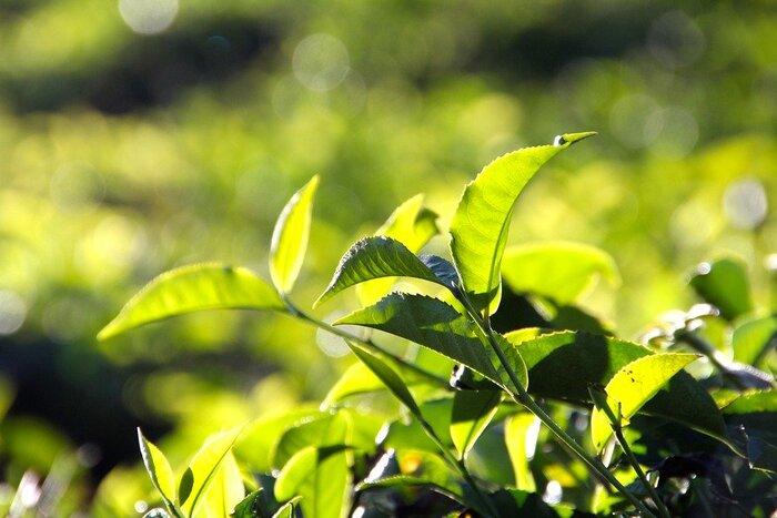 花粉の季節には、この1杯。すっきりしたい時の「ハーブティー&リラックス茶」