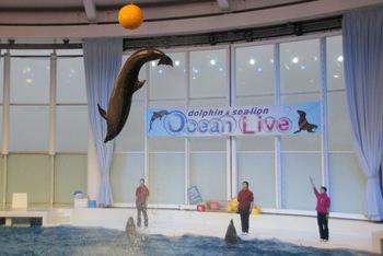 大洗水族館と言えば、イルカとアシカのショーです。屋根付きの会場で天候に左右されることなく、コミカル&ダイナミックなショーを楽しめます。