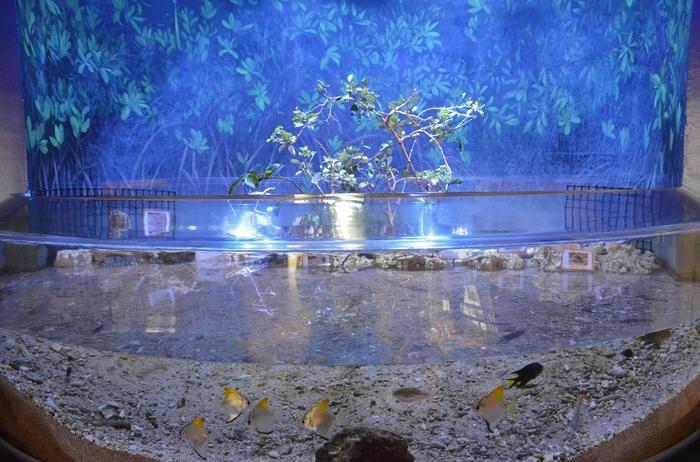 茨城の川をイメージした森と川ゾーンは、開放的なアクアリウム空間が広がります。上流、中流、下流に住む魚の生活を観察できます。ヤマメやイワナなど、ちょっと美味しそう!?なお馴染みの川魚たちが展示されています。