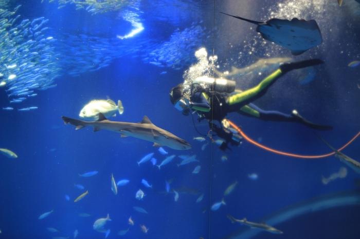 巨大水槽の中で、ダイバーの方が水中カメラで魚を映しながら、魚の紹介をしてくれるアクアウォッチング。イルミネーションが輝き、幻想的な空間で楽しい時間が過ごせるショーです。