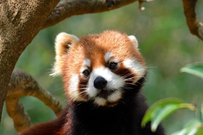 ブータン留学生ドルジがデートに出かける八木山動物公園。仙台市民から長く愛される動物園です。仙台駅から車で約10分、青葉城から車で約3分と立地もよく、仙台観光にぴったりの場所。物語の登場アニマルであるレッサーパンダにも会えますよ。
