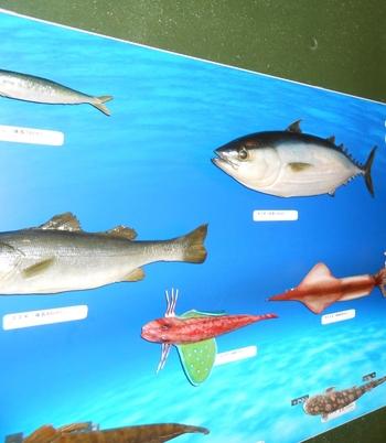 なるほど魚っちんぐでは、スタッフによる生き物に関するレクチャーが受けられ、貴重映像や実験などを通して、楽しく生き物について学ぶことができます。1回のレクチャーを受けるとスタンプがもらえ、3つ貯めるとお魚博士に認定されます!