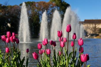 明治初期に整備されてできた上野恩賜公園は、敷地内に博物館や美術館、動物園などが集まり、子供から大人までが楽しめる場所。写真は公園中央の噴水広場です。