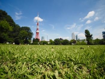 東京タワーのすぐ近くにある芝公園。日本で最も古い公園の一つで、四季折々のお花が楽しめる歴史ある公園です。