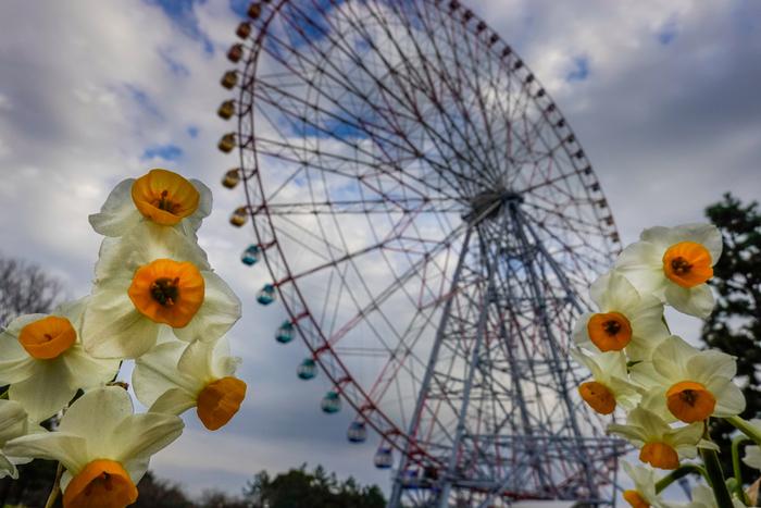 大きな観覧車が目印の葛西臨海公園。お花はもちろん、渡り鳥なども見ることが出来る自然にあふれた公園です。園内には水族館もあるので、ご家族でも1日楽しめそうですね。