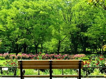 都会のオアシスとして人気の日比谷公園。綺麗に手入れされた花壇の周りにはベンチもあり、お仕事や用事の合間の休憩にぴったりの場所です。