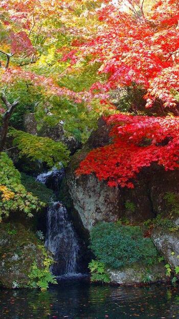 こちらは巨岩による石組と渓流を中心とする庭園「石楽園」の見事な滝。庭園はこの他にも「苔庭」「萩の道」「竹庭」などに分かれ、四季折々の景観が楽しめます。  特に11月頃には、庭園内の紅葉が一斉に色づき、紅葉の名所としても多くの方が訪れます。