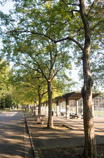 駒沢大学駅から徒歩15分ほどのところにある「駒沢オリンピック公園」は、名前の通りかつてオリンピックの会場となった公園です。サイクリングコースやジョギングコースがあり、運動をしにくる方も多くいます。緑も多いので、歩いているだけでももちろん気持ち良いですよ♪(筆者撮影画像)
