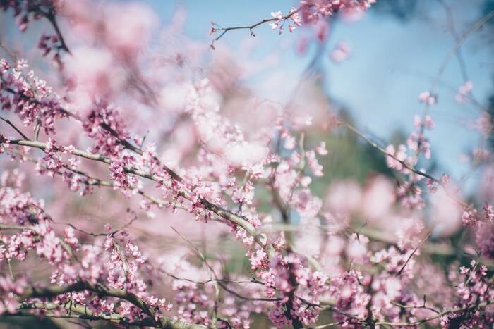 この時期、公園に行って撮りたいものと言えば、季節のお花ですよね!「いつも似たような写真になってしまう」という方は、前ボケを意識して撮影してみましょう♪メインの被写体となるお花の前に、さらにお花や葉っぱがあると上のような写真になります。幻想的でやわらかな雰囲気が出せますよ。