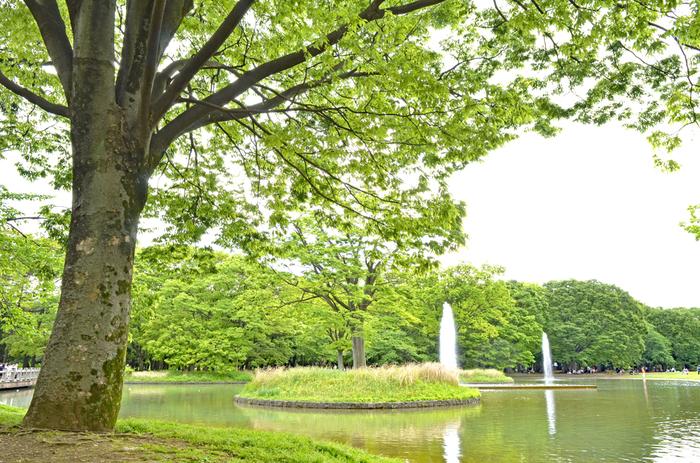 噴水近くは、ブラブラお散歩するとその水の音も心地よいエリア。ドッグランもあるので、ワンちゃんと一緒に訪れたい方にもおすすめの公園です。