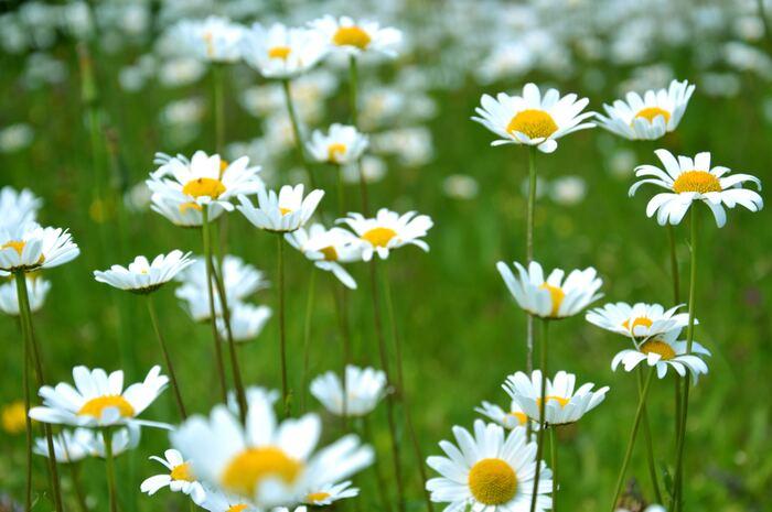 カジュアル派もきれいめ派も!「まっさらな白アイテム」で作る春の洒落コーデ
