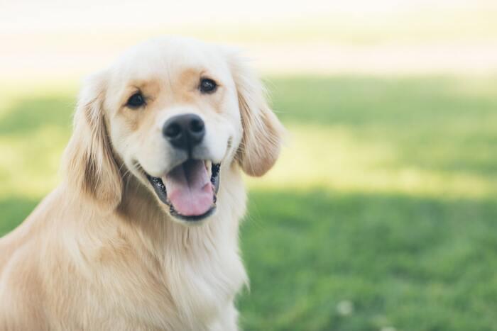 大洗水族館では盲導犬、介助犬を除くペットの入館はできません。ペット預かりを希望する方は、ひたちなか市または水戸市周辺のペットホテル等を利用しましょう。