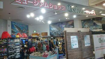 サメを由来とするガレオスでは、サメを中心に深海生物、アンモナイト、世界の貝など、博物館のような珍しい商品を取り揃えています。