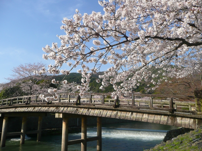 """普段は見られない景色に出会おう。特別な""""春""""の楽しみ方"""