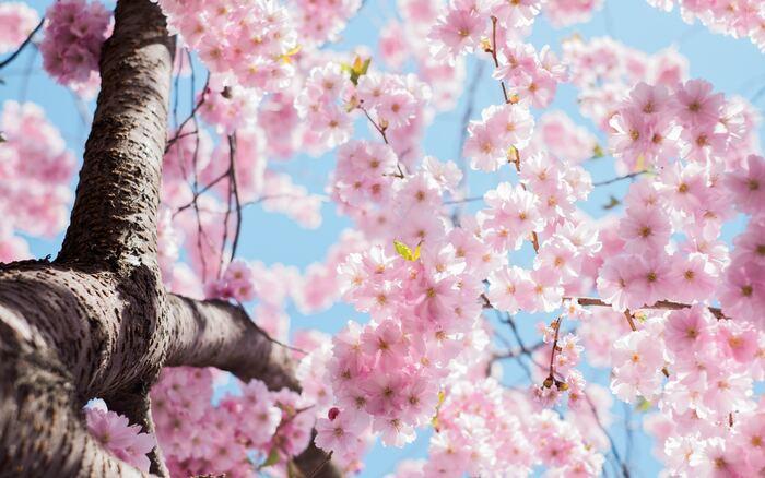 春先に取り入れたい、肌触りふんわりな「ダブルガーゼ」アイテム