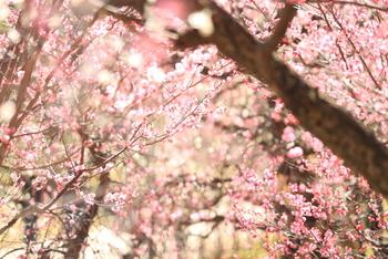 梅や桜、椿、紫陽花など、四季折々の自然が楽しめます。瑞々しいグリーンだけでなく、訪れた季節が分かるようなそのとき見頃のお花を撮影してみましょう。