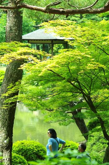 広島駅前から市内循環バスに乗り5分ほどのところにある「縮景園(しゅっけいえん)」は、1620年に築成された歴史ある庭園です。一歩足を踏み入れると、マイナスイオンが溢れるオアシスのよう。日本らしさを感じられることから、新郎新婦の和装撮影場所として選ばれたり、外国からの観光客も多く訪れる人気スポットです。