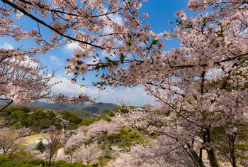 """桜の名所としても知られる「千光寺公園」は""""日本さくら名所100選""""に選定されています。春の公園内は桜で埋め尽くされピンクの世界に。秋には紅葉で真っ赤に染まり、四季折々の自然で楽しませてくれます。"""