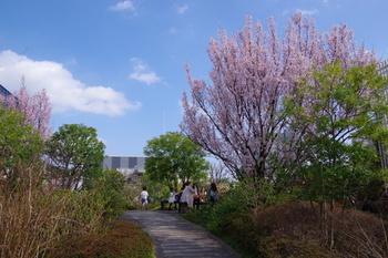 春には桜が咲くので、これからの季節にぴったりです*お買い物の合間に立ち寄ってみてはいかがでしょうか?