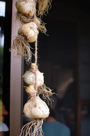 ・色が白くふっくらして他と比較して重たいもの。軽いものや乾燥してひび割れがあるものは収穫から日にちが経って水分が失われており、傷みやすい。  ・緑色の芽が出ているものは、成長のために芽に栄養分が吸収されるため、本体の風味が落ちます。  ・お値段が高めでも、できれば国産のものを。安価な海外産は香りが薄いことが多く、鱗片も小さめでカットしにくい(筆者も体験済み)。