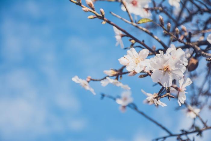 """春が始めどき。おうち時間を豊かにする""""先回り掃除"""""""