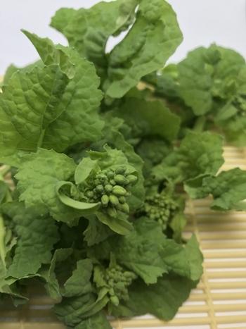栄養ぎっしり!季節の恵み「春野菜」に元気をもらう、おいしいレシピをご紹介♪