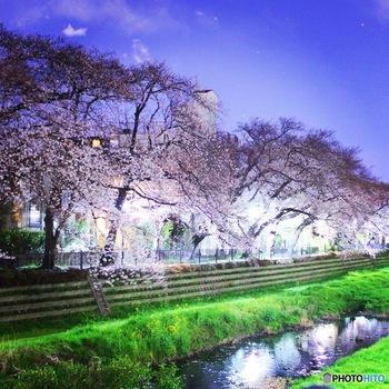 夜はライトアップされることもあり、昼間とは違った幻想的なお花見を楽しめます。里山に咲く桜の美しさを堪能してみてください。