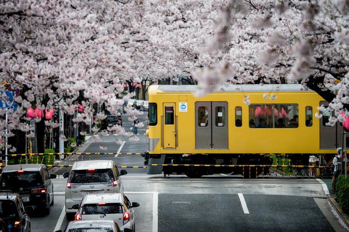 【都内】春の桜をゆっくり眺めよう*ひとり占めしたい「お花見穴場スポット」