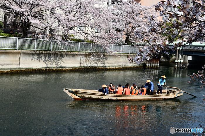 時期によっては櫓漕ぎ和船が運行されることも。川面にせり出すように咲く桜を見上げながらの船旅は、まるで江戸時代にタイムスリップしたかのよう。下町ならではの粋なお花見を楽しみたい方にもおすすめです。