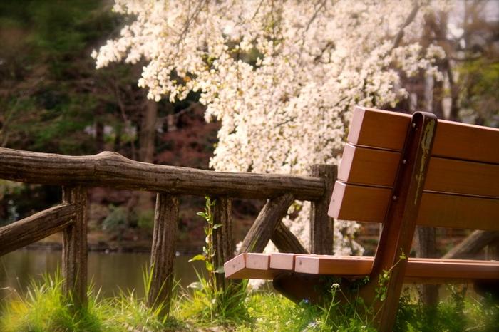 ベンチに座ってのんびり桜を眺めるのもおすすめ。お気に入りのドリンクと本を片手に、時間を忘れてのんびり過ごしてみませんか?