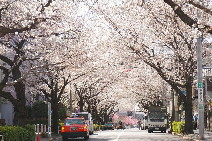 東急目黒線の不動前駅すぐのところにある「かむろ坂」は、品川百景の1つにもなっている桜の名所。通勤で通ることがあっても立ち寄る機会がなかった、という方はぜひ途中下車してみませんか?