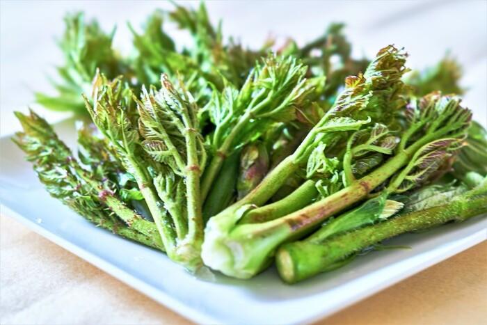 ふきのとう、つくし、タラの芽。「春の山菜」でつくる美味しいおつまみレシピ