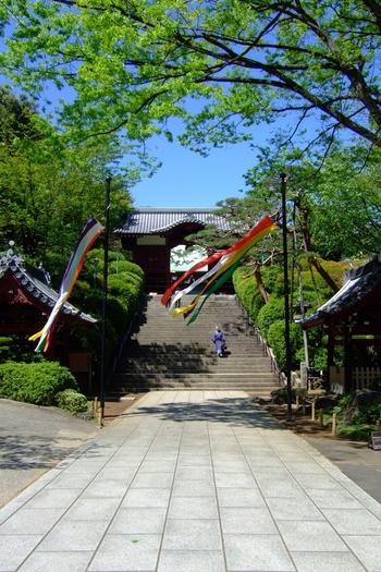 そして、都心部とは思えないほどに、緑豊かで自然豊か。閑静で、心静かな一時が過ごせる場所です。  思い立ったら、ぜひ出掛けてみて下さい。江戸・東京の、素晴らしい一面を、きっと発見するはずです。 【晩春の「護国寺」境内参道】