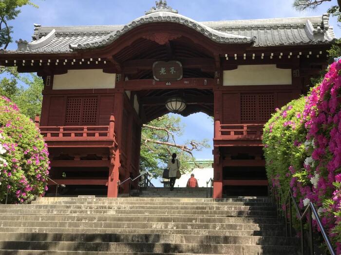 桂昌院は、京の八百屋の娘として生まれ、数奇な運命を辿り、徳川家光、春日局の寵愛受けて、家光の側室から将軍の母という座に着いた人物です。そうした運命からか、桂昌院は、大変信心深く、数々の寺院を綱吉に建立させています。「護国寺」は、その代表例で、他にも、京都の「智積院(金堂)」の建立や、応仁の乱で焼失した「南禅寺」や「善峯寺」等など、京都の多くの寺院の再建・再興に尽力しています。  【京都・鞍馬寺を基に設計された「不老門」は、昭和13(1938)年4月建立。額面の「不老」の二字は、徳川家達公の筆によるもの。(ツツジ咲5月初旬の「不老門」)】