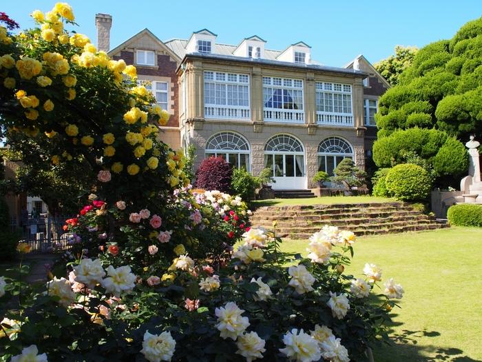 """大正期を代表する住宅建築として名高い「鳩山会館」。その見所は様々にありますが、""""バラとステンドグラスの鳩山会館""""という当館のキャッチコピーの通り、見所の第一は、約150株にもおよぶ薔薇が植えられた英国風庭園です。 【5月中旬の洋館と庭園】"""