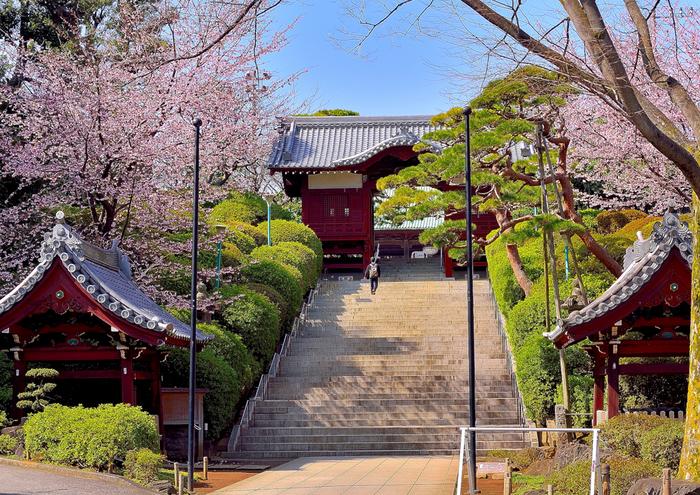 北西に向かって深く広がる「護国寺」の境内は、都会の喧騒を忘れるほどに、静穏で、落ち着いた雰囲気です。  見所が多い「護国寺」ですが、寺のハイライトは、二つ。 一つは、「仁王門」先に建つ「不老門」へのアプローチです。特に「不老門」と参道の階段は、絵になる眺めです。春の頃は、桜やツツジが美しく、新緑の頃は、丹塗の門と緑が相俟って実に印象的です。【桜の頃の「不老門」】